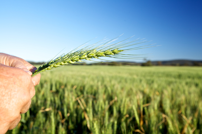 Agriculture remains a major employer in Australia but the challenges of competition, food security and climate change are on the horizon. AAP image/supplied by Graincorp