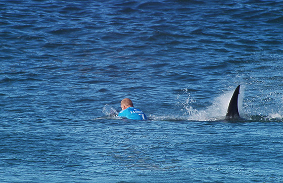 Shark Attack on Defending Champion Mick Fanning Halts J-Bay Open